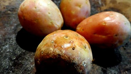 Fun with Sour Prickly Pears (Xoconostle) – Experiments in my